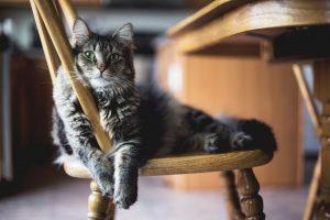 הסקרנות הרגה את החתול… והיושבנות הרגה את האדם.